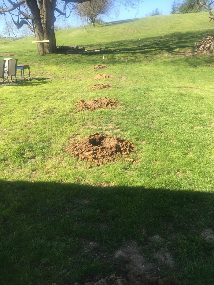 holes dug by the auger